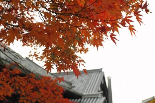赤い紅葉と屋根瓦