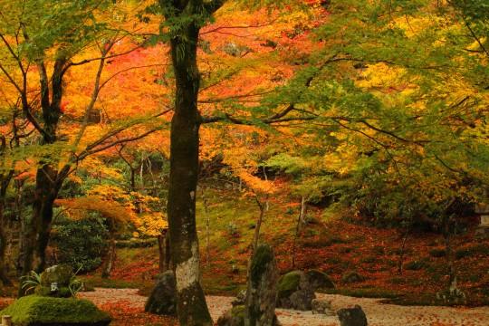 色鮮やかな紅葉と日本庭園