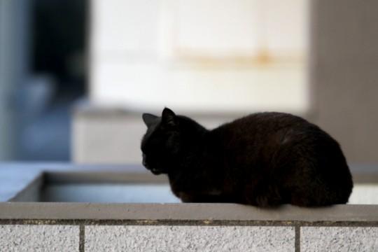 昼寝中の黒猫