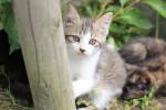 遊ぶ子猫2