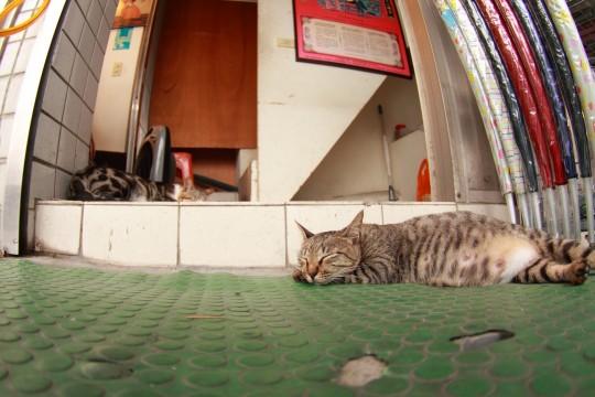 店先で眠るネコ