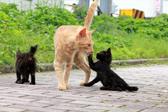 野良猫の親子