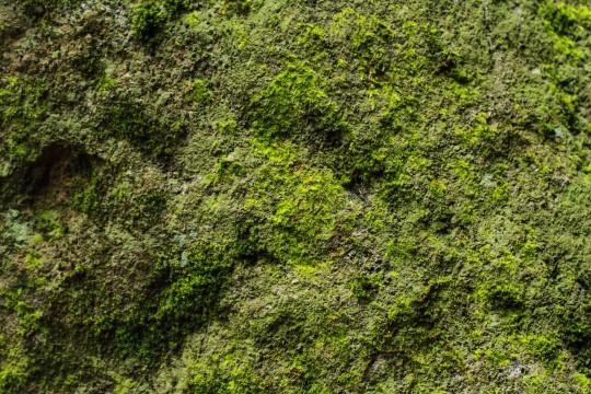 岩に生えた苔