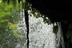 蔦と水しぶき