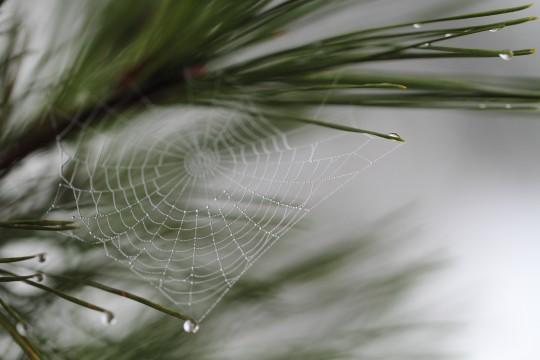 水滴のついた蜘蛛の巣
