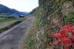 田舎道とヒガンバナ