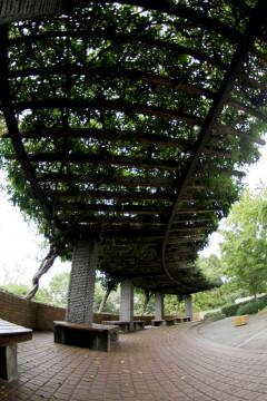 葉っぱの屋根とベンチ2
