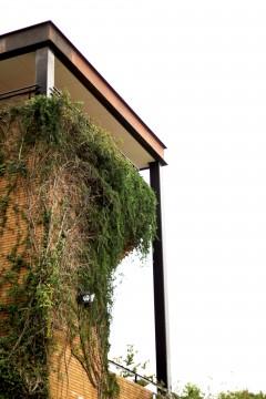 ツタに覆われた建物