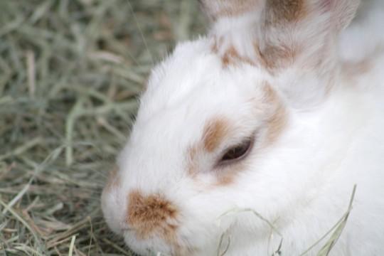 寝てるウサギ2