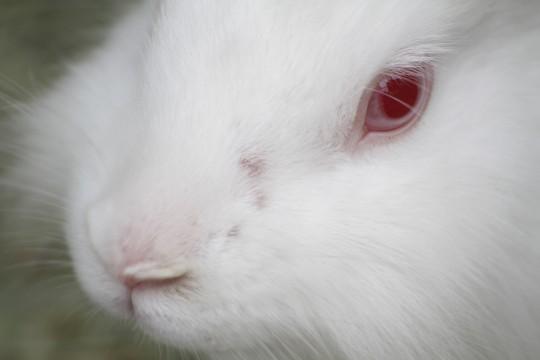 ドアップのウサギ