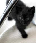 黒猫の赤ちゃん