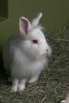 毛が長いウサギ2