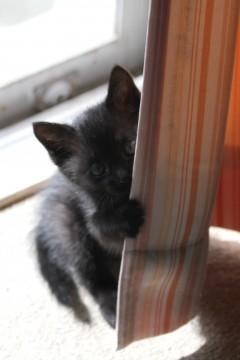 黒猫の赤ちゃん2