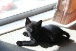黒猫の赤ちゃん3