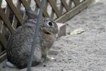 茶色いウサギ2
