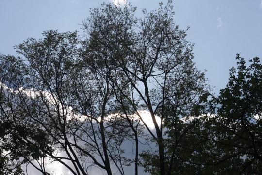 空と木と陽(ひか)り