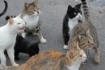 野良猫の群れ