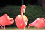 3羽のフラミンゴ