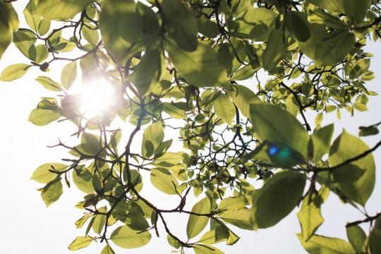 新緑と木漏れ日1