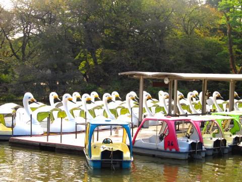 公園のボート乗り場