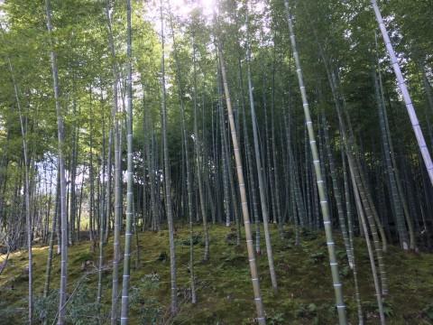 嵯峨天龍寺の竹林