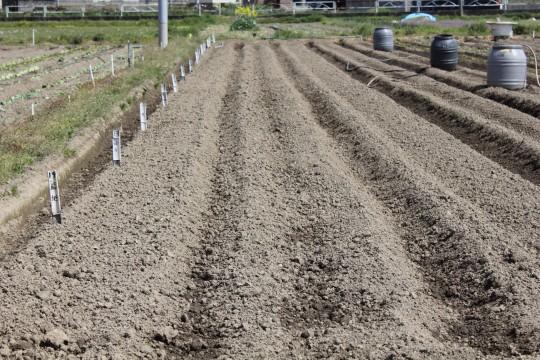 種をまく前の畑