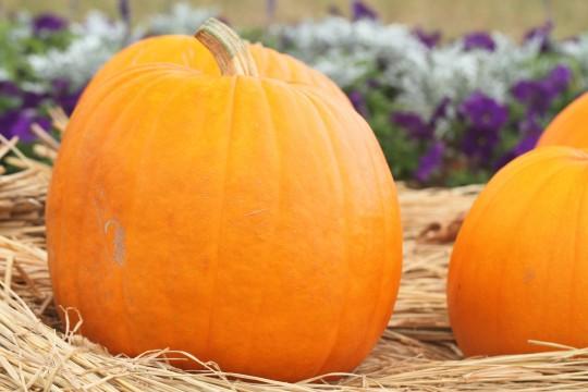 ハロウィンの大きなかぼちゃ8