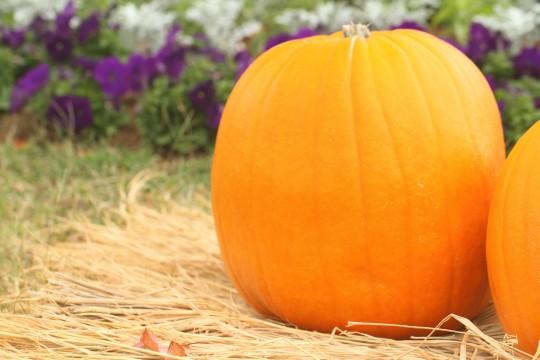 ハロウィンの大きなかぼちゃ7