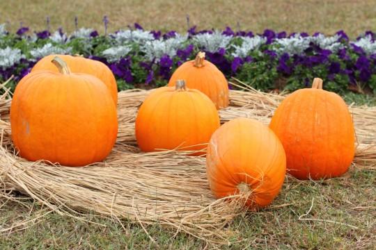 ハロウィンの大きなかぼちゃ4