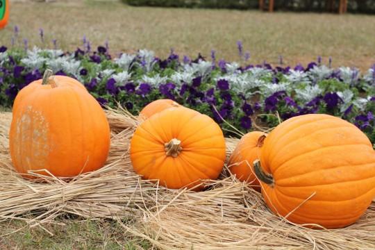 ハロウィンの大きなかぼちゃ3