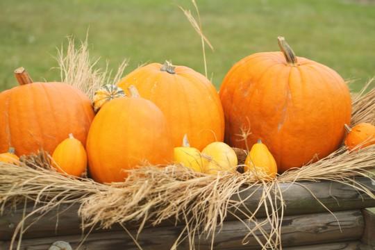 ハロウィンの大きなかぼちゃ1