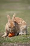 image_rabbit