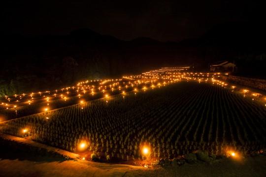 棚田の火祭り