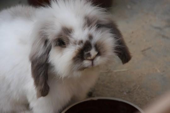 見上げたウサギ