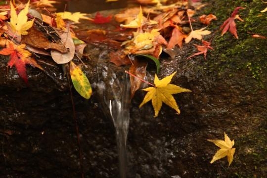 水辺の落ち葉1