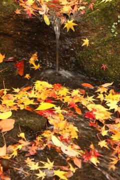 水辺の落ち葉2