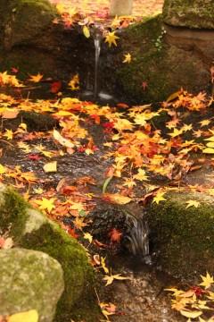 水辺の落ち葉3