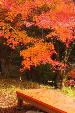 赤いベンチと紅葉