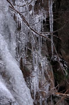 凍りついた枝とつらら