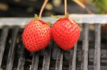 2つ並んだイチゴ