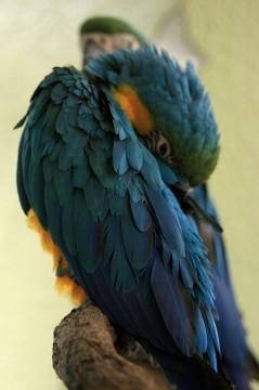 オウムの羽