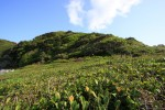 生い茂る緑の絨毯