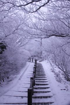 霧氷した木々と雪の積もった階段