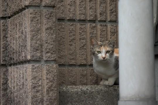 見つめる猫2