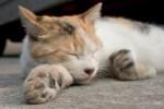 腕枕で寝る猫