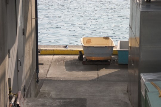 漁港の猫2