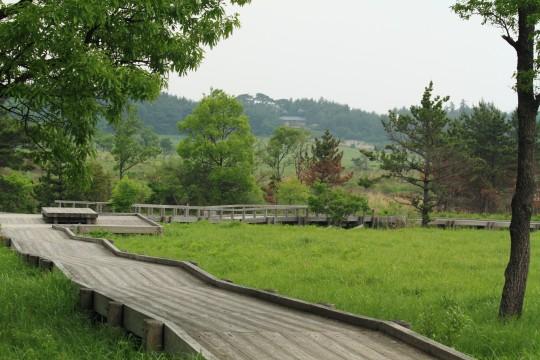 湿原の木道3