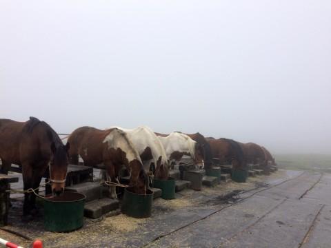 霧の中の馬