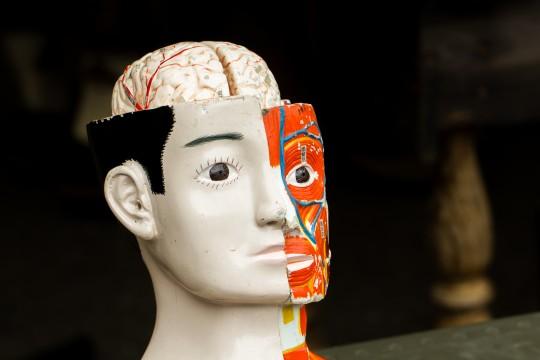 人体模型の頭部