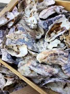 沢山の牡蠣の貝殻
